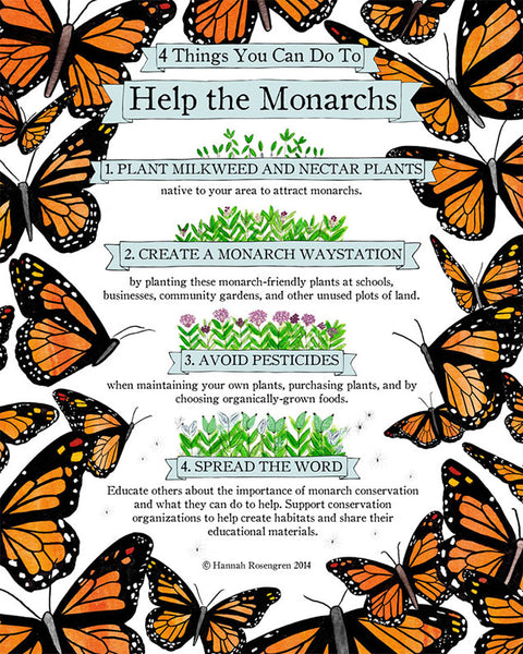 "Four Things You Can Do to Help the Monarchs 16x20"" Poster"