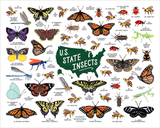 "U.S. State Insects 16x20"" Poster"