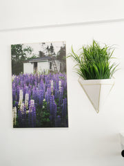 Kara O'Keefe Lupins Printed on Wood
