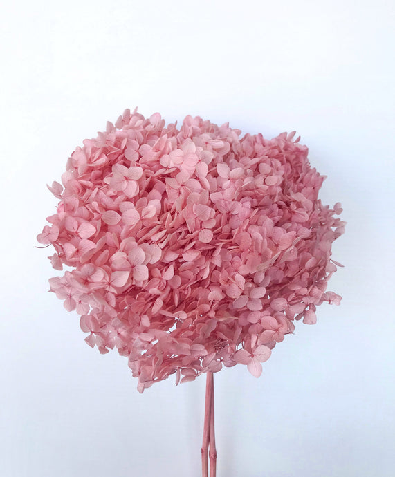 Preserved Hydrangea ~ Rosy Pink
