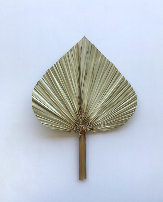 Dried Palm Spear Natural Stem