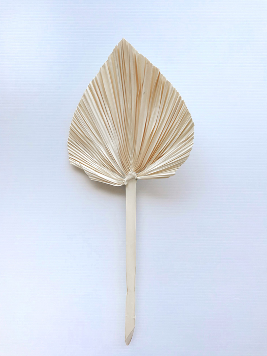 Dried Palm Spear Bleached