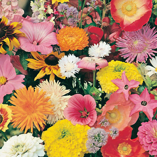 D.T. Brown - All Year Round Favourite Flowers Seed Pack