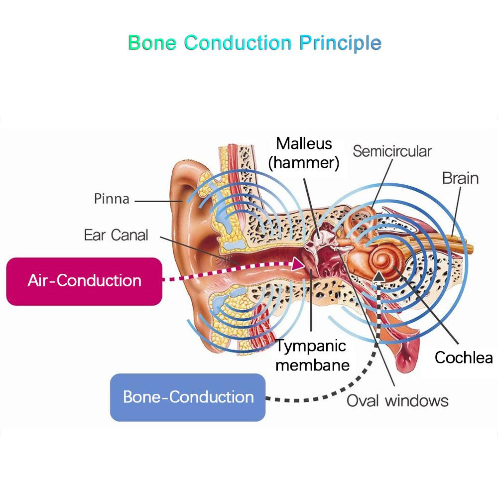 For Seniors Bone Conduction Wireless Headphones Bluetooth V4.2 IPX4-Bone Conduction Ear Diagram