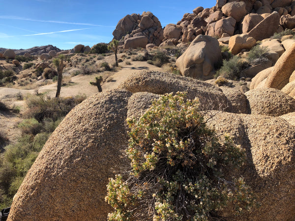 Desert landscape with rocks and foliage in Joshua Tree National Park