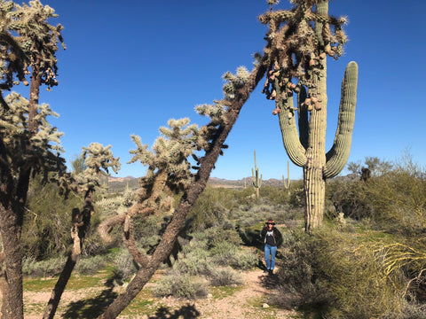 Grace Griffin standing amongst large cacti at Superstition Mountain, Arizona