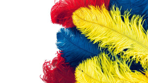 Ostrich Feather Promotion