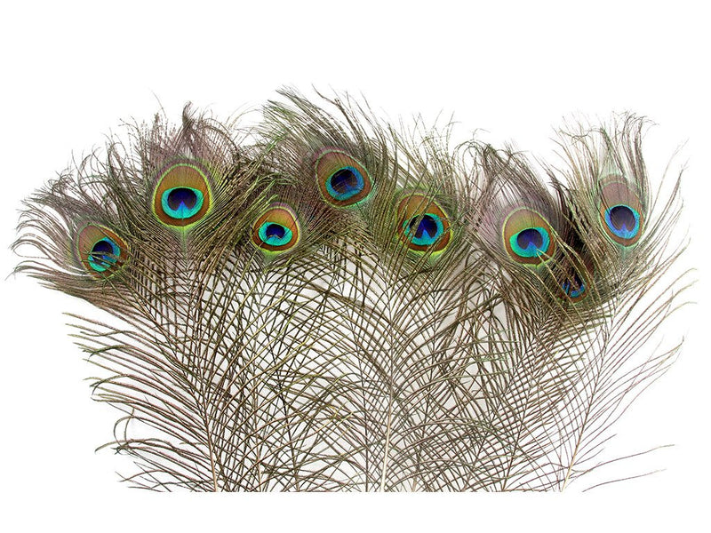 Peacock Eye Feathers - FancyFeather.com