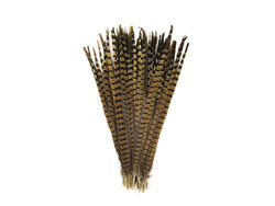 Pheasant Natural Ringneck Feathers