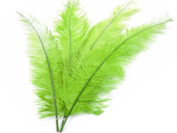 Ostrich Spad Feathers