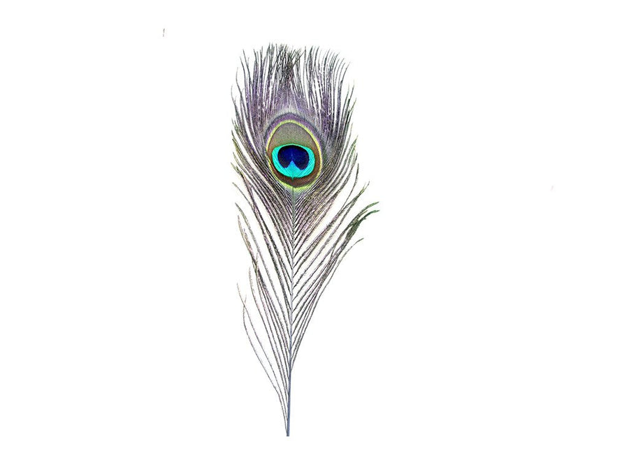 Peacock Stem Dyed Eye Feathers