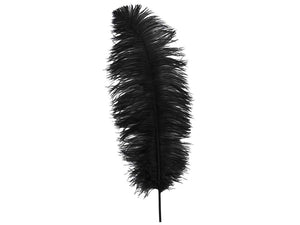 Premium Ostrich Feathers | Ostrich Wing Feathers - FancyFeather.com