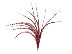 Pheasant Venery Reeves Feathers