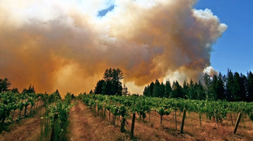 Do I Need to Worry About Smoke in My California Wines?