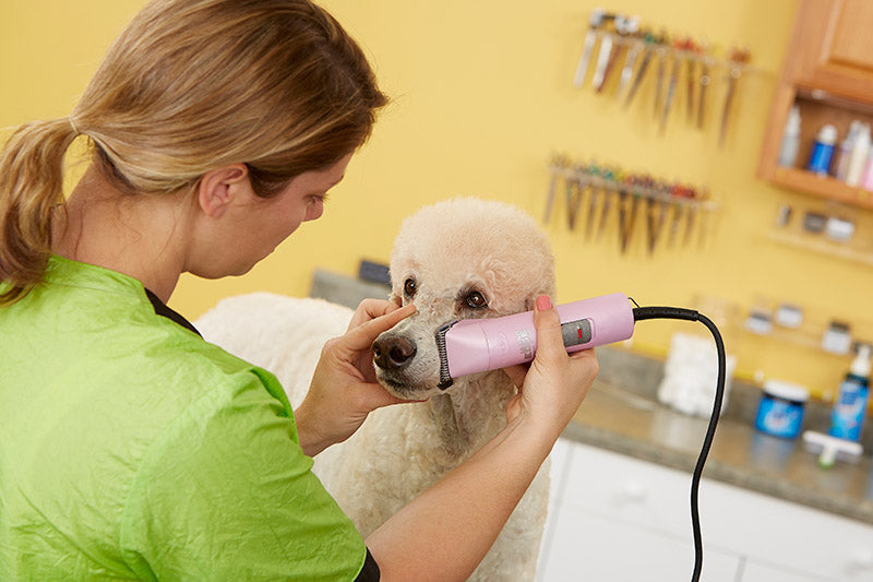 10 At-Home Pet Grooming Tips - abkgrooming