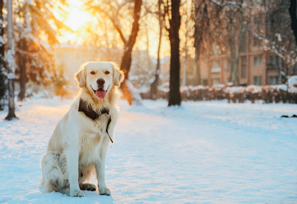 Keep Your Furry Friends Well Groomed This Winter