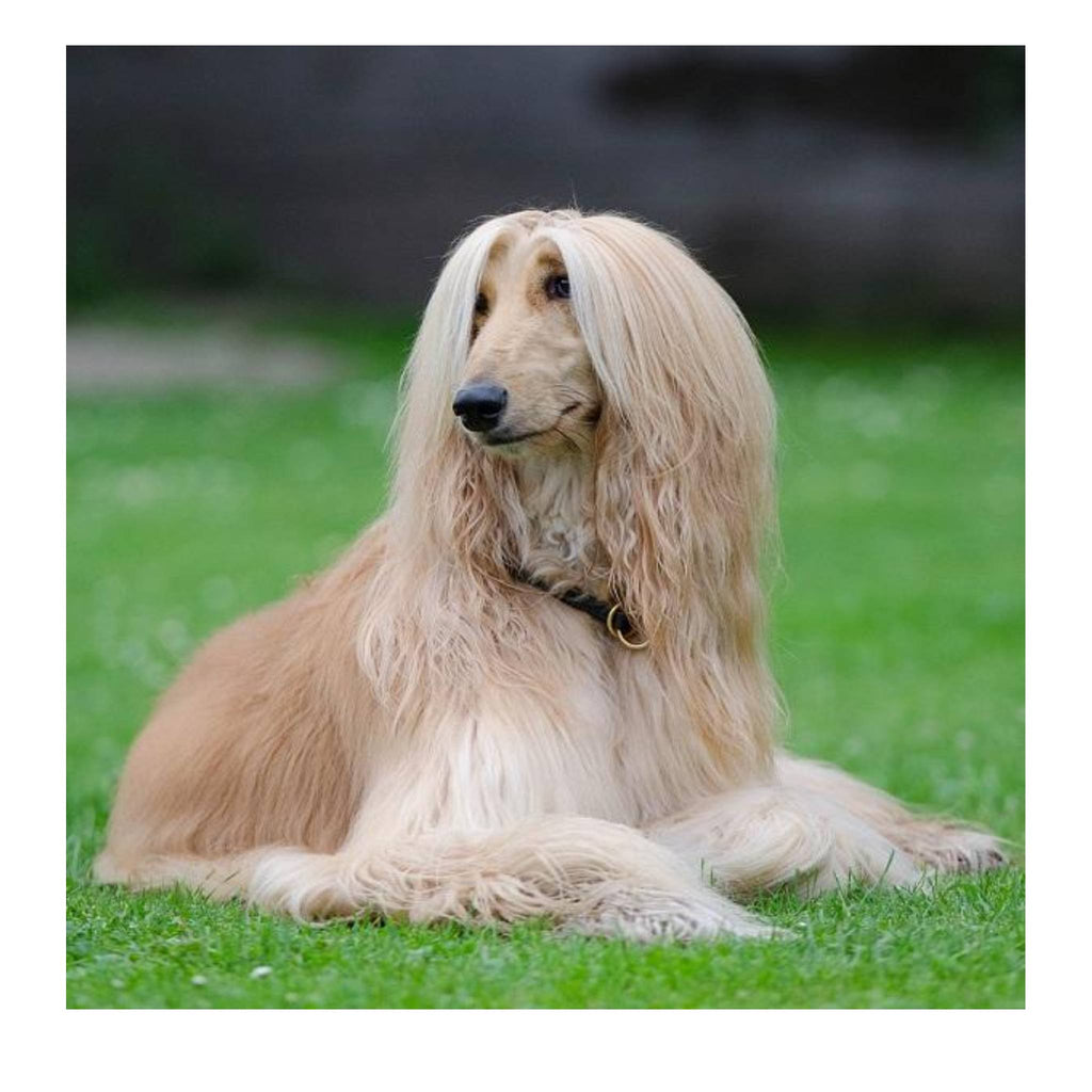 How to groom a long coat dog step by step?