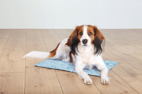 cooling mats for dogs