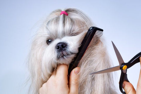 Start early grooming for your pup
