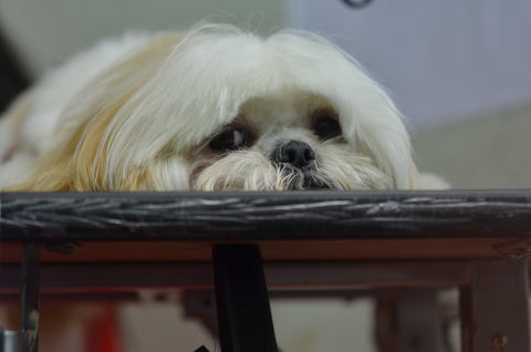 Dog grooming competition 2014 - throwback