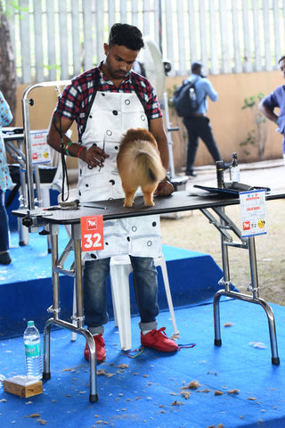 Dog grooming competition tables
