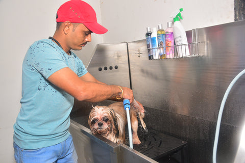 dog having bath