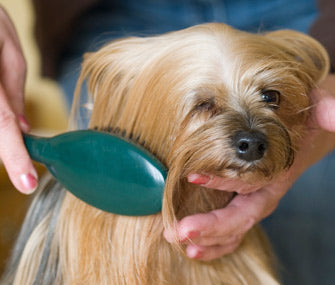 Andis Pin Brush for Pets
