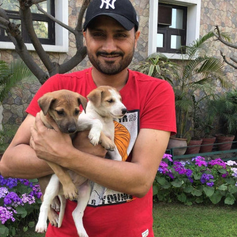 harbhajan and his pets