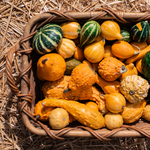 la basketry things to do during lockdown eat your veggies. winter squash in a basket