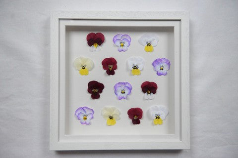One-of-a-kind Pansy Frame