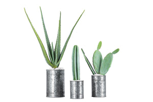 3 Piece Cactus Arrangement AR1057