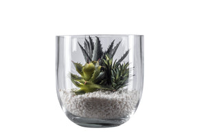 "8"" Colie  Bowl with Succulents AR1047"