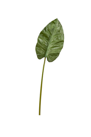 "31.5"" Anthurium Leaf   ST1018"