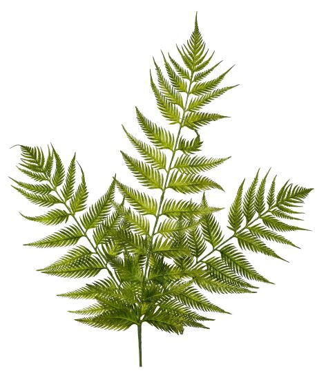 "22"" Bracken Fern Stem    FR1010"