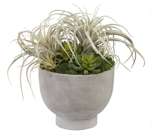 "9""W Concrete Compote Bowl with Mixed Airplants and Succulents AR1006"