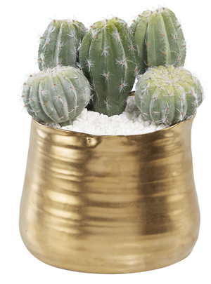 "7.25""H Brushed Gold Pot with Cactus AR1011"