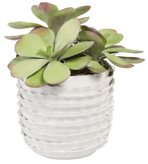 "7.5"" Ripple Pot with Succulents AR1016"