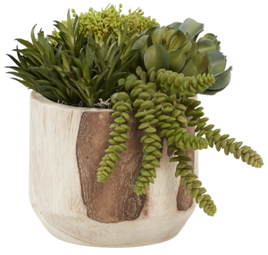 "7"" Wood Sedona Pot with Succulents AR1027"