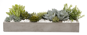 "31"" Balboa Tray with Mixed Succulents and Rocks AR1030"