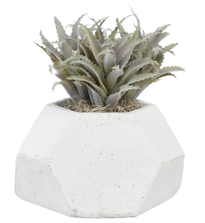 "11"" x 6"" Geo Pot with Succulents AR1034"