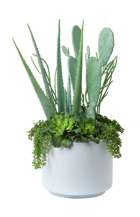 "13"" Chandler Planter with Cactus & Aloe Arrangement   AR1091"