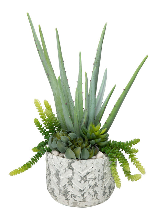 "Aloe Arrangement in 8"" White Chevron Stone Pot AR1187"