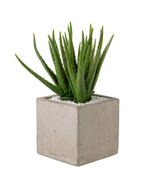 "8"" Concrete Balboa Square with Aloe AR1198"