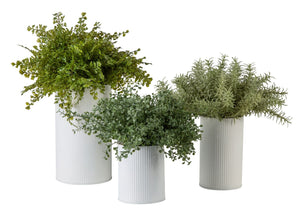 Herb Trio Arrangement in White Metal Cylinders AR1203