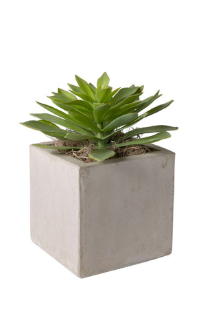 "6"" Concrete Balboa Square with Single Succulent AR1206"