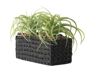 "12"" x 5"" Black Water Hyacinth Basket with Airplants AR1241"