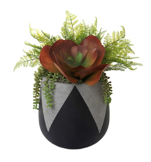 "9.75"" Black Emma Planter with Succulents AR1247"