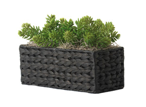 "12"" x 5"" Black Water Hyacinth Basket with Succulents AR1252"