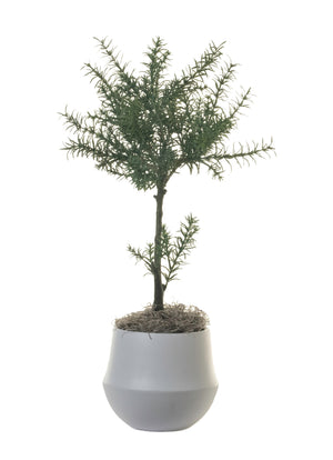 "24"" Potted Rosemary Topiary in 6"" London Planter AR1316"