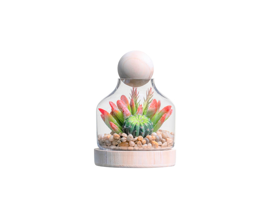 "7"" Chileno Terrarium with Succulent Arrangement   AR1334"